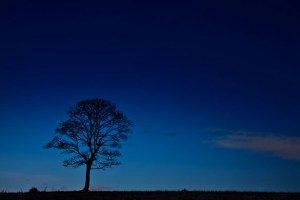 tree-silhouette-at-night-11296573307pby-300x200