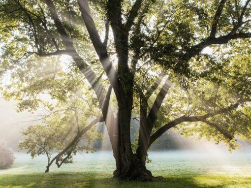 Sacred Oak Healing Services